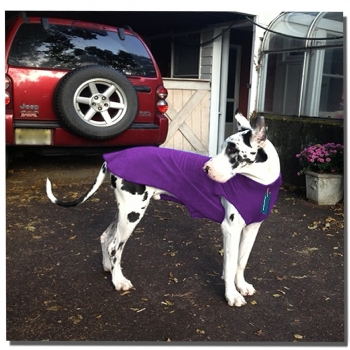 Winter outwear for Great Danes
