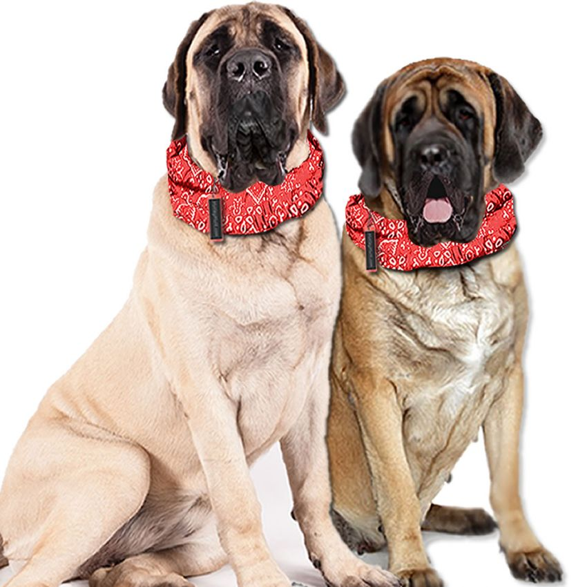 Cooling Collars for Giant Breed Dogs Cooling Dog Bandanas Mastiffs