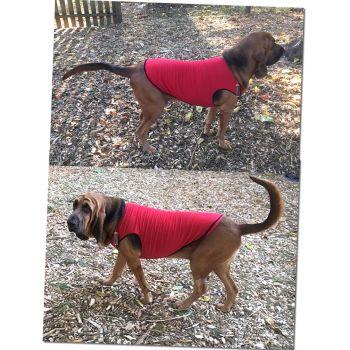 Bloodhound Dog T-Shirts for Bloodhound Large Dog Breeds