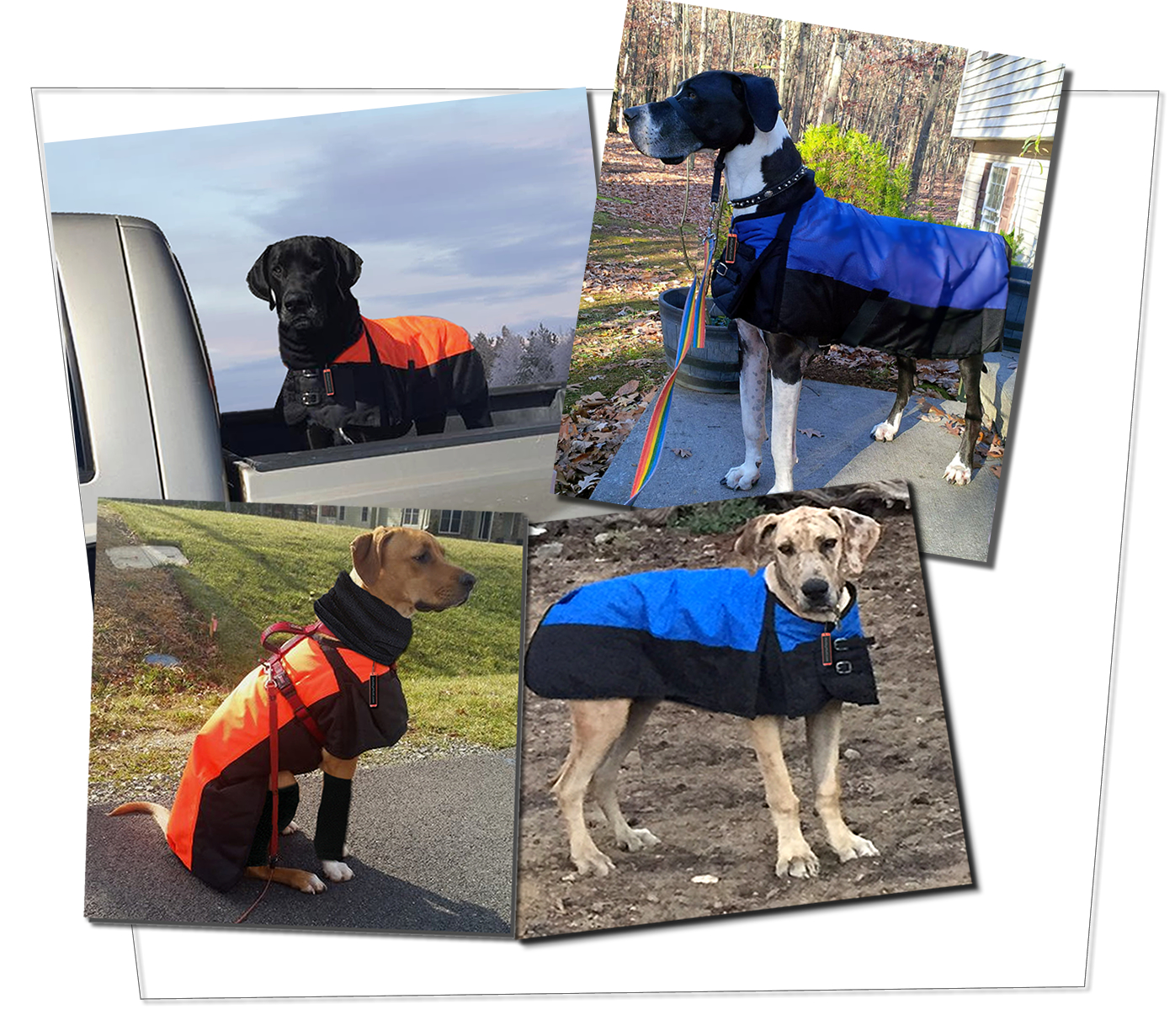 Waterproof Dog Coats for Large Dogs to Giant Dog Breeds