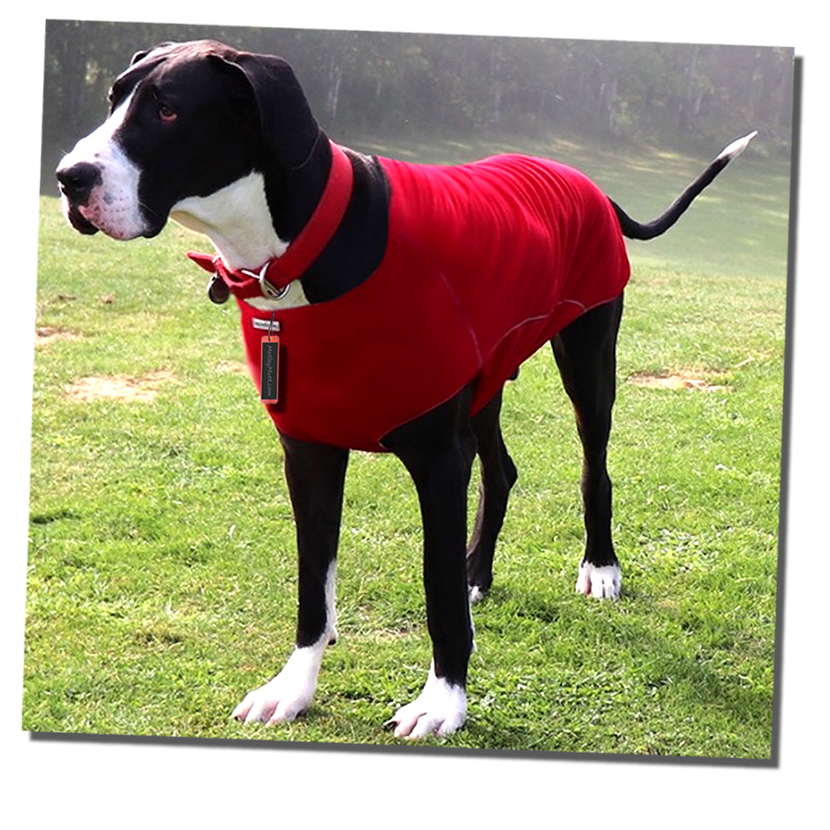 Great Dane Sweaters for Great Danes