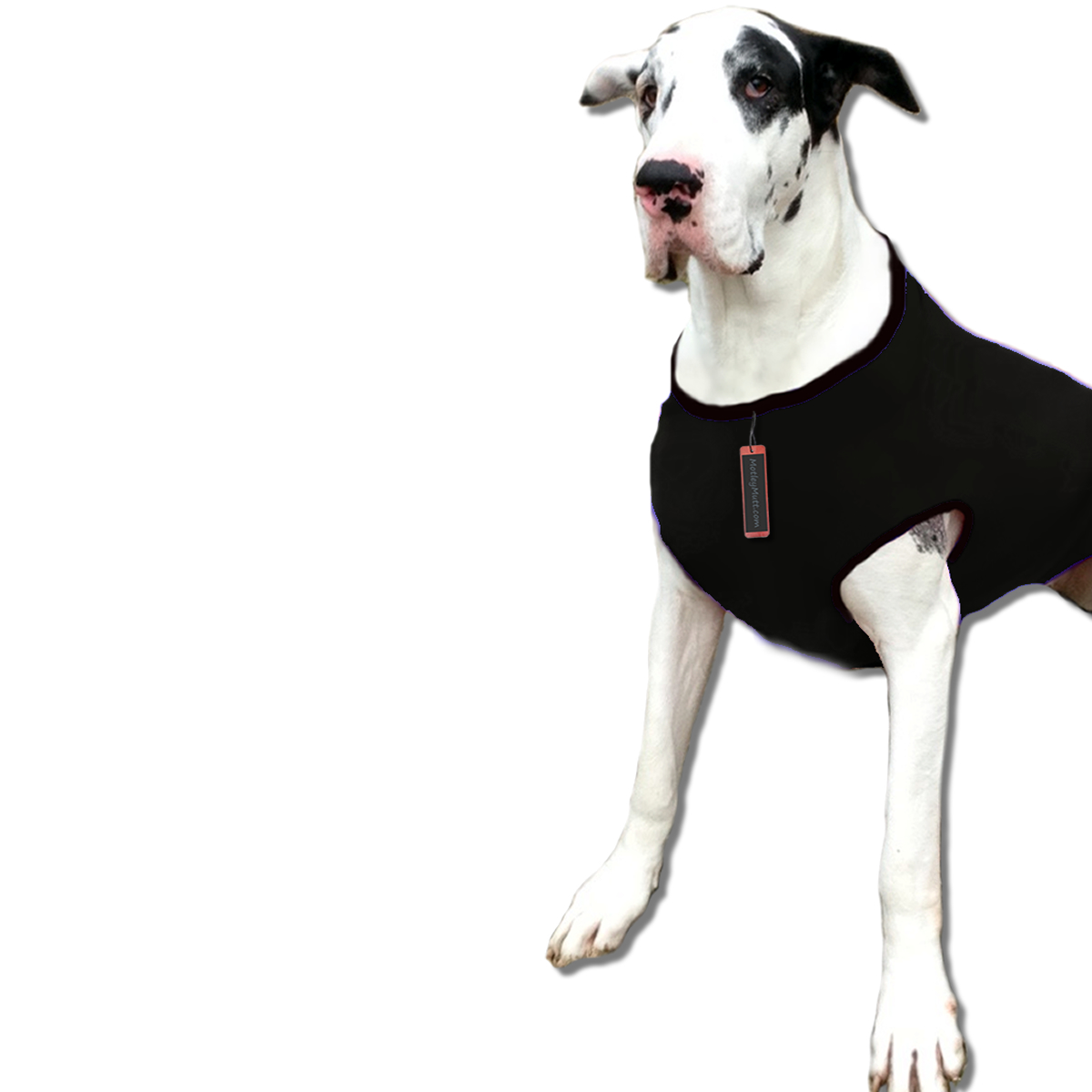 Dog Shirts for Big Dogs